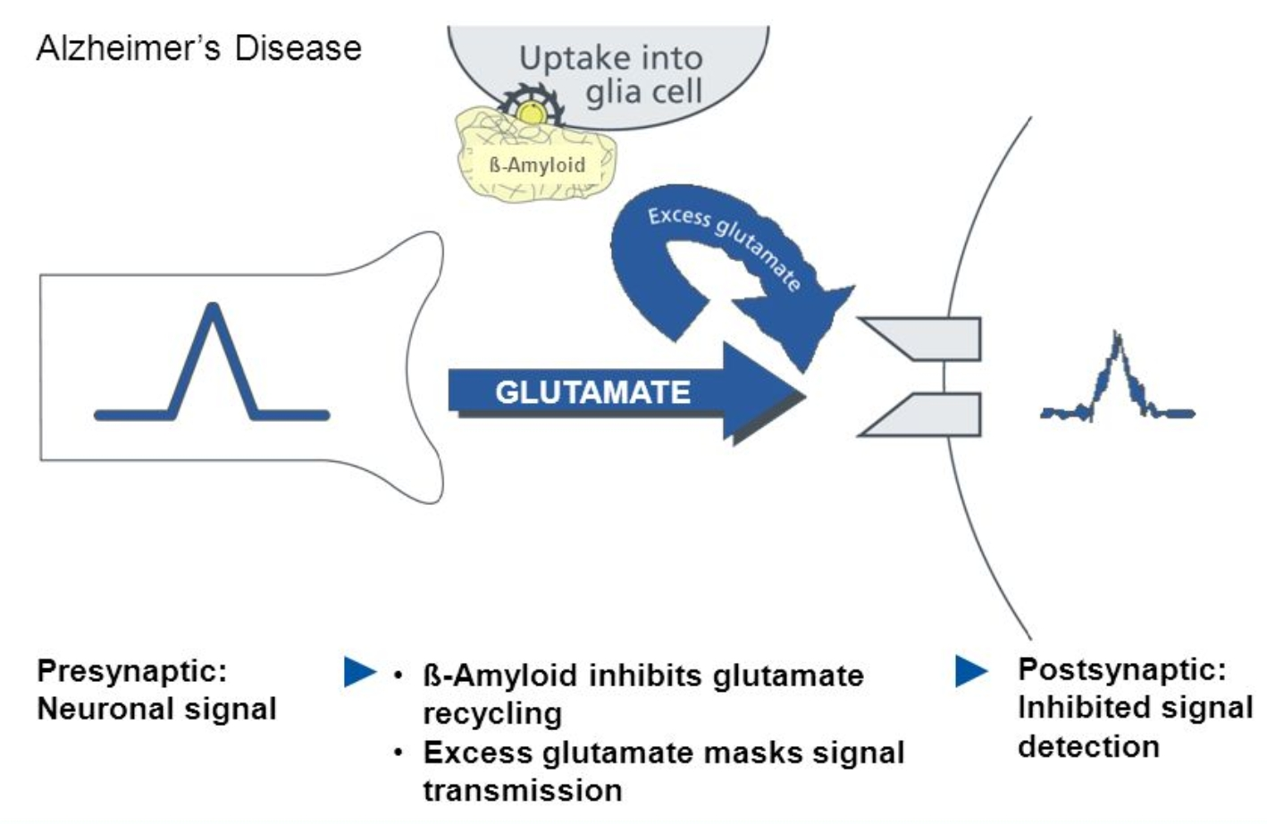 modafinil and oxiracetam stack